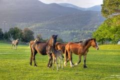escamot_cavalls_montseny