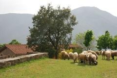 ovelles_casa_rural_cervera